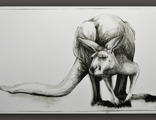 Drawing of Kangaroo No. 21