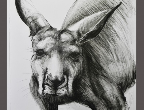 Drawing of Kangaroo No. 23