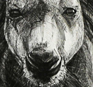 Portrait Drawing of Kangaroo 30 b