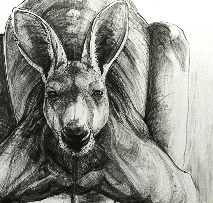Portrait Drawing of Kangaroo 30