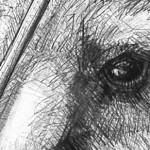 Detail E of Portrait of Kangaroo 45 by Michael Chorney