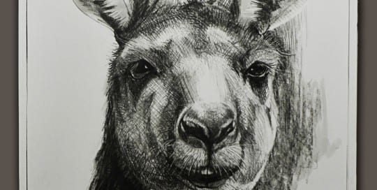 Kangaroo drawing 13 by Michael Chorney