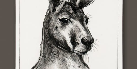 Kangaroo drawing 2 by Michael Chorney